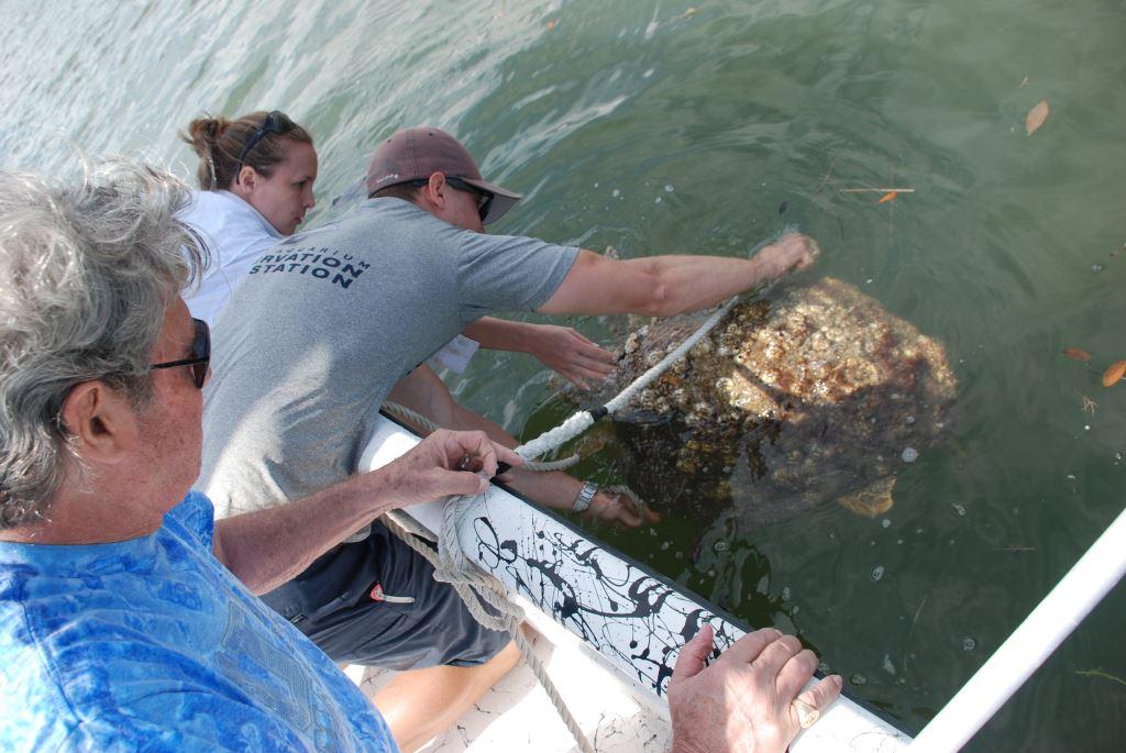 Sea Turtles in Georgia Sea Turtle Assisted by Georgia