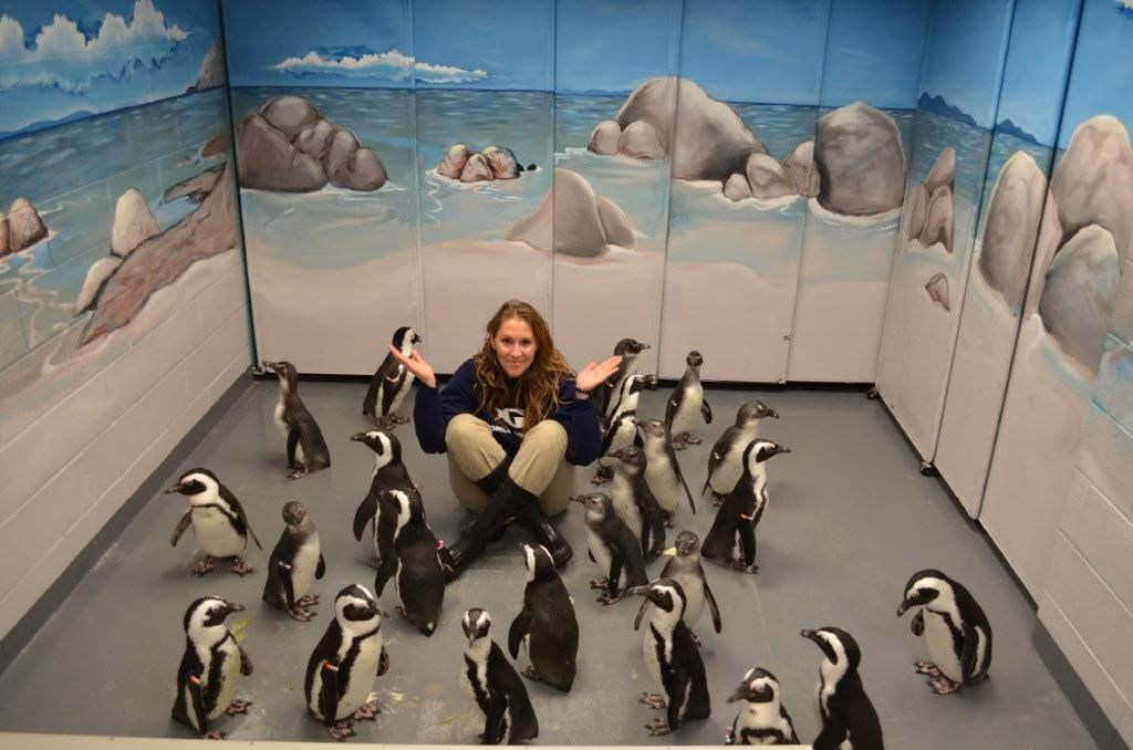 Penguin Chicks with Erin