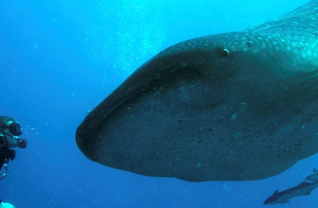 Newly Announced Marine Protected Area To Be Mexico's Largest