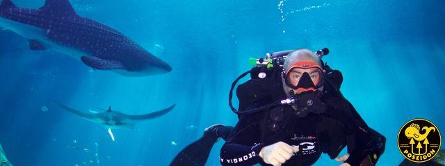Georgia Aquarium and Poseidon Diving System Team Up for Ultimate ...
