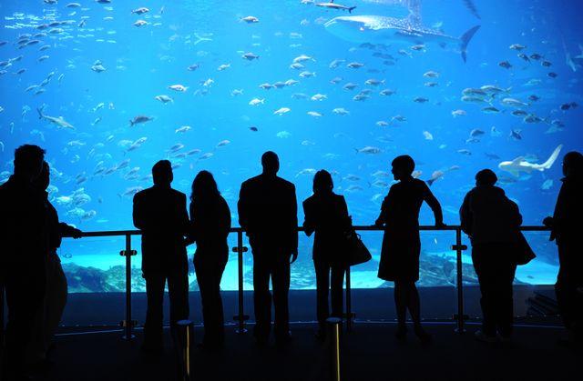 Winter Fest returns to Georgia Aquarium January through March