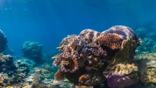 Diving Into Deep Learning to Save Coral Reefs