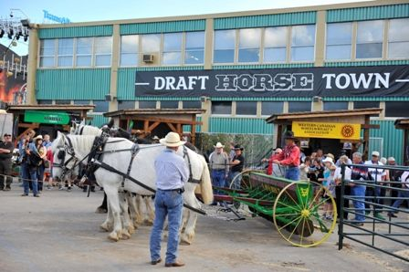 Draft Horse Town Celebrates Those Gentle Giants With The Big Shoe Calgary Stampede