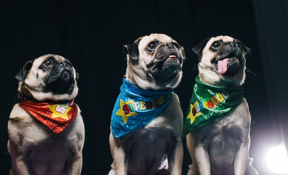 The President's Choice SuperDogs