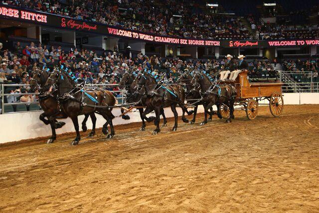 World Championship Six Horse Hitch Grand Champion