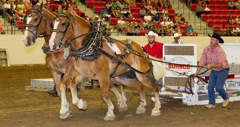 2014 Heavy Horse Pull