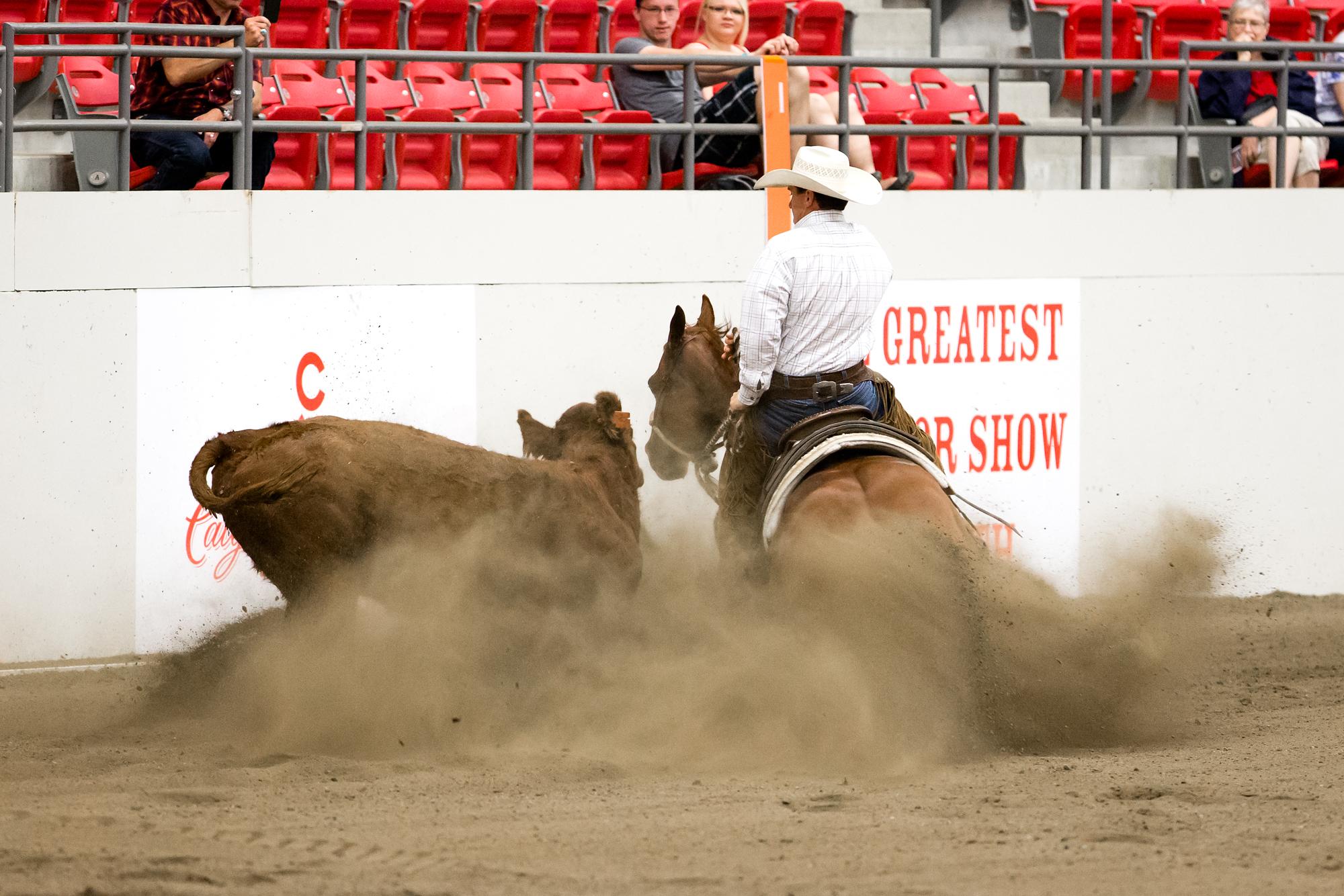 Schaal Wins Calgary Stampede Working Cow Horse Open