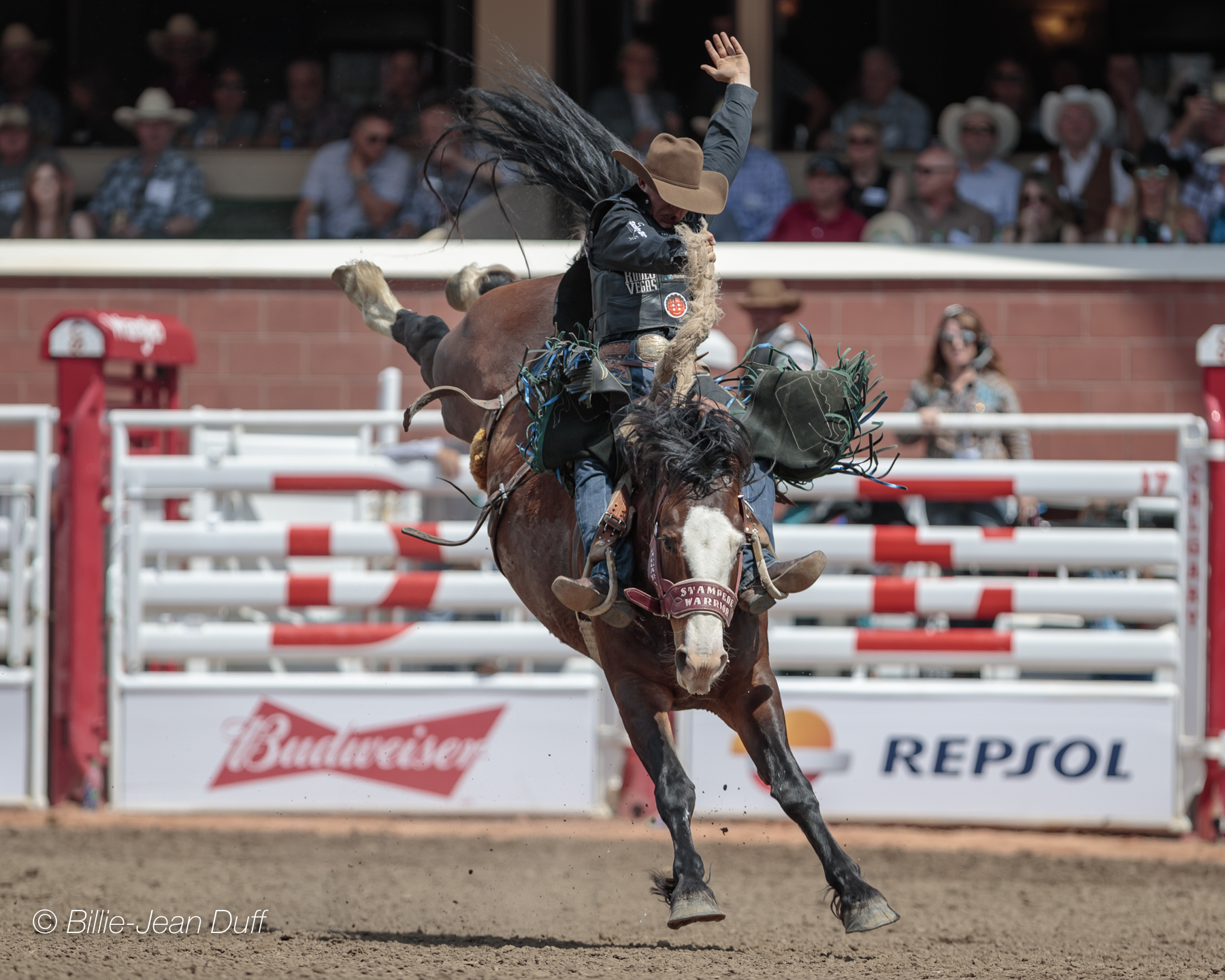 Past Champions Dominate Day One Calgary Stampede Rodeo