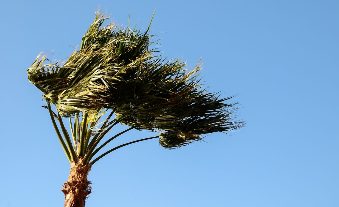 SCE Crews Ready to Respond as Strong Winds Forecast Through Weekend
