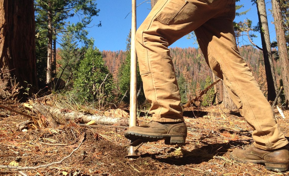 SCE Rebuilds Forest Ravaged by Beetles, Drought
