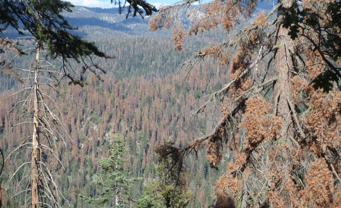 SCE Steps Up Wildfire Preparedness in the Sierra Nevada