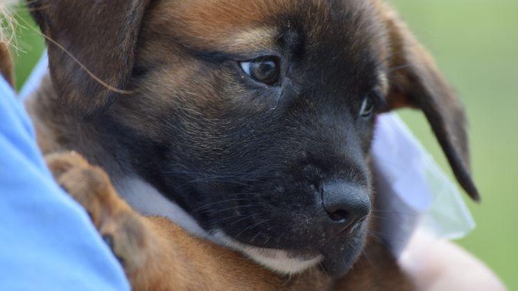 22 Dogs are Headed to Minnesota from ACS Thanks to a Grant from ASPCA