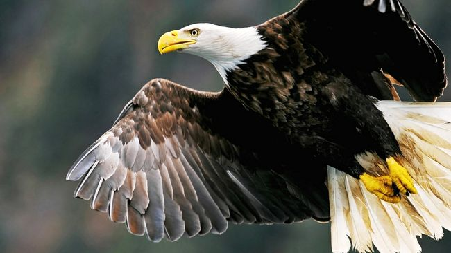 Popular eagle viewing day returns to Duke Energy Indiana's Cayuga Generating Station