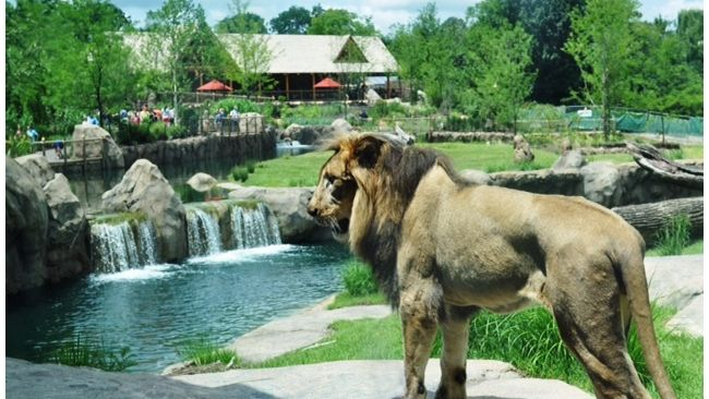 Duke Energy Foundation supports Cincinnati Zoo & Botanical Garden's Living Classroom