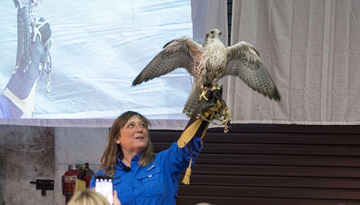 13-Eagle-PS
