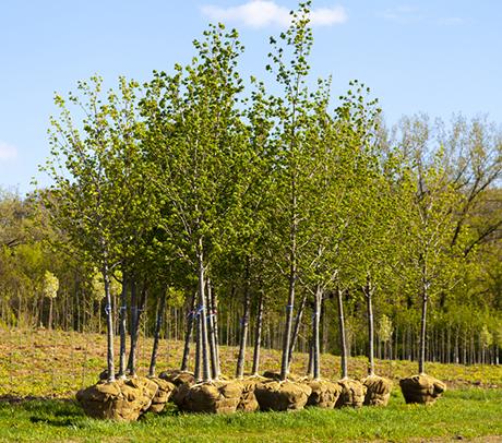 02-Trees