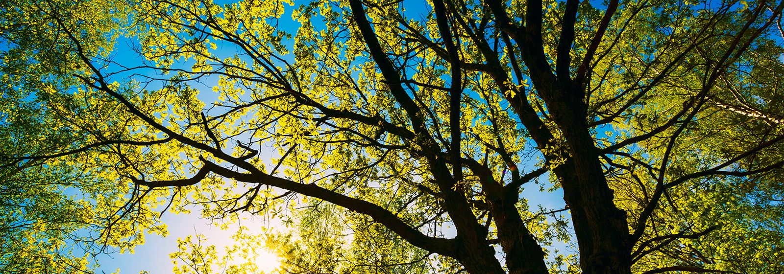 8 tips for healthy trees