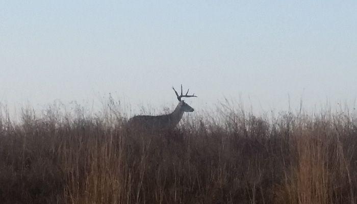 20160119_080301_Deer_Grasses_700x400