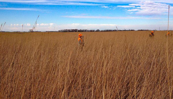03-PS_Prairie