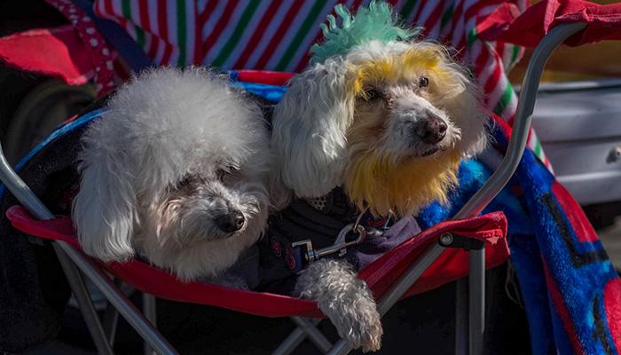 PS02-2018-0327-mns-pet-fair