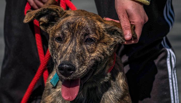 PS11-2018-0327-mns-pet-fair