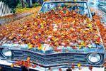fall leaves on vintage car