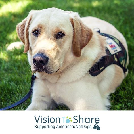 Vision to Share 3