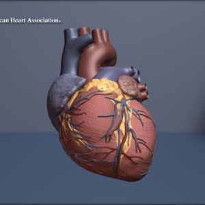 Multi-gene test predicts early heart disease risk