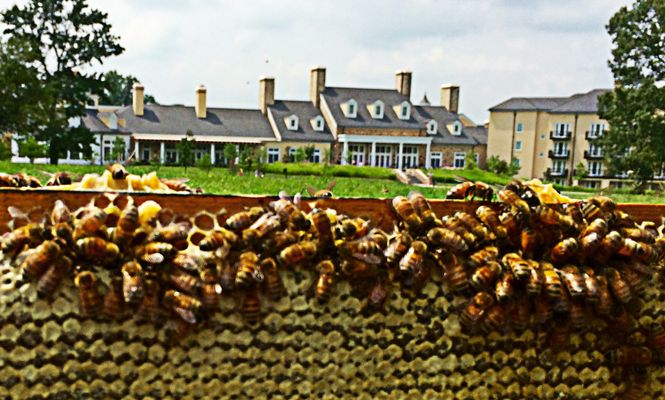 What's All the Buzz About? Salamander Resort & Spa Launches Honeybee Program